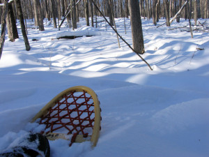 Snowshoeing an old growth forest at Hartwick Pines State Park near Grayling