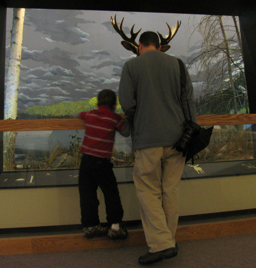 Lad with dad in moose antlers and lad study wildlife diorama at MSU Museum