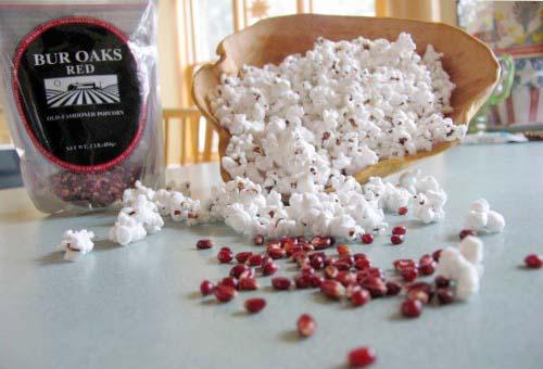 Michigan-grown Bur Oaks Red popcorn is tasty and tender