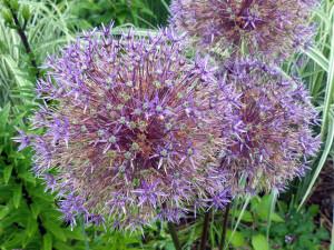 flower WildWorks.P1040899