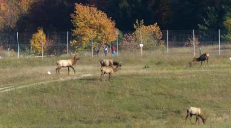 Gaylord: Where the Elk Roam