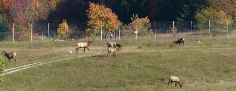 Gaylord: Where the Elk Roam