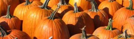 Got Pumpkin? Make These Cupcakes