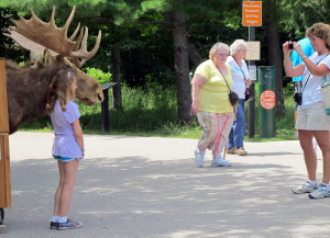 Moose sighting at the park