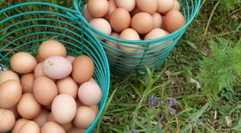 Borchers Egg Casserole