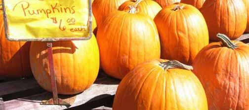 crop.pumpkins-saugatuck_7631