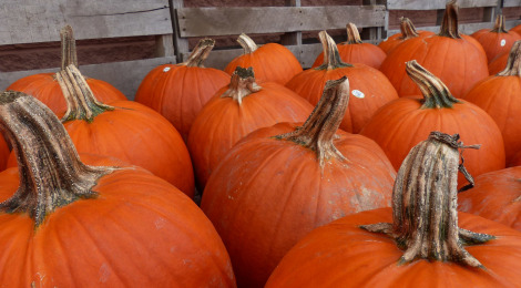 It's a Great Season for...Pumpkins