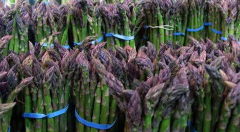 Asparagus: That's the Spear-It!